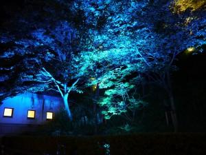 樹木ライトアップ